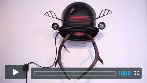 Stag Beetle 2017